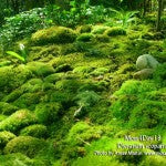 MountainMoss_Moss4Day18_Dicranum_scoparium_Moss4Day18_AnnieMossGarden_WEB