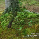 MountainMoss_Moss4Day24_TreeBase_WEB