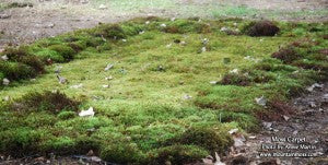 MountainMoss_Mossery_MossCarpet_WEB
