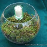 Terrarium Big Bowl Tall Candle-1