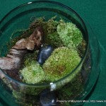 Terrarium Big Bowl Tall Candle-4