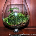 Terrarium-Brandy Large-1