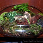 Terrarium-Large Flat Glass-1