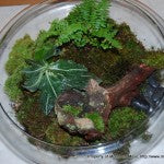Terrarium-Large Flat Glass-3