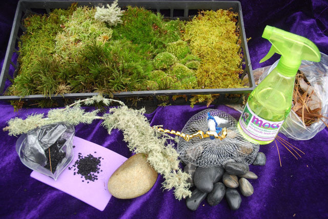 Diy Moss Terrarium Kit Mountainmoss