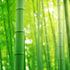 Top 10 Healthy Benefits of Bamboo Shoot
