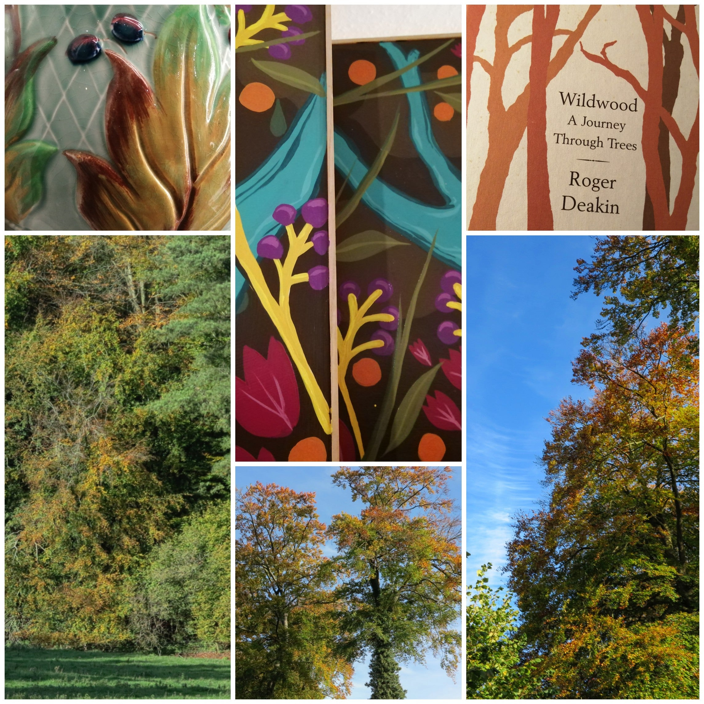 Don't Miss The Colourful Display At Westonbirt !