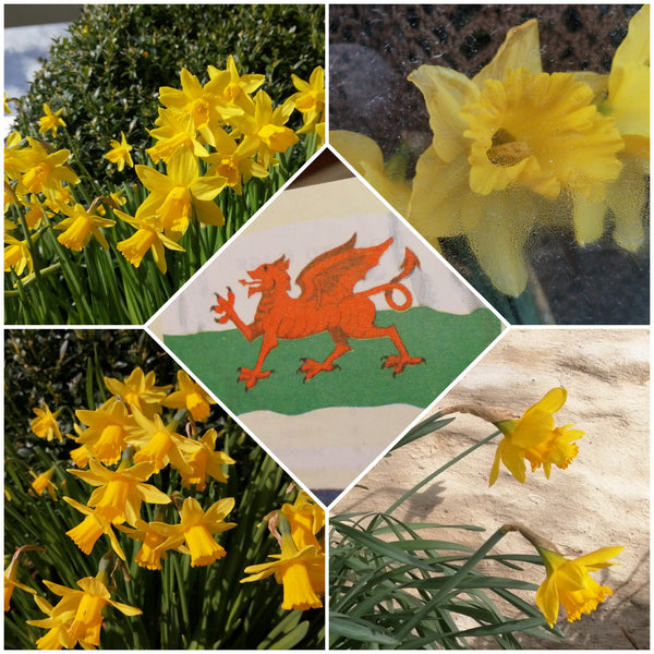 St Davids Day At Top Banana !