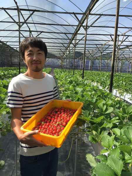 Chitose Ichigo (Strawberries) - Store Pick Up Only!