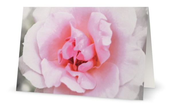 GC- Pink Rose Greeting Card - Tru-Artwear.ca