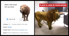 See 3D animals from Google! From lions to penguins, see the full list!