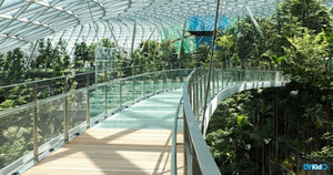 Enjoy 3 Months of Unlimited Access to Jewel Changi Airport Attractions