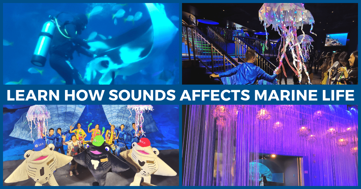 Hear the Ocean @ S.E.A Aquarium's Ocean Fest: The Noisy Ocean! | Resorts World Sentosa