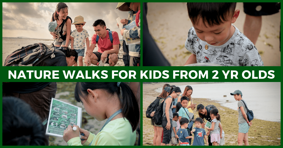 Step into Nature with Young Nautilus' Biodiversity Nature Walks in Singapore!