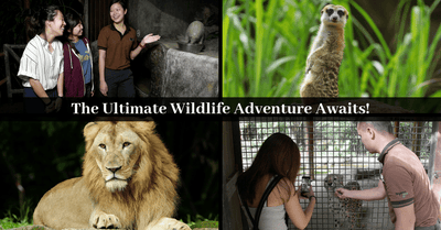 Wildlife Reserves Singapore Brings An All-New And Exciting Wildlife Experience For The Whole Family To Enjoy!