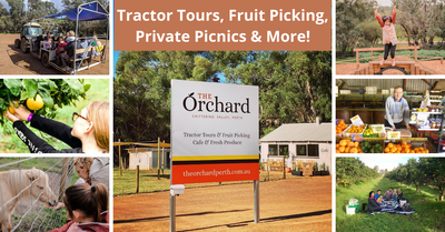 Six Things To Do At The Orchard Perth | Tractor Tours, Fruit Picking, Gourmet Private Picnics & More!