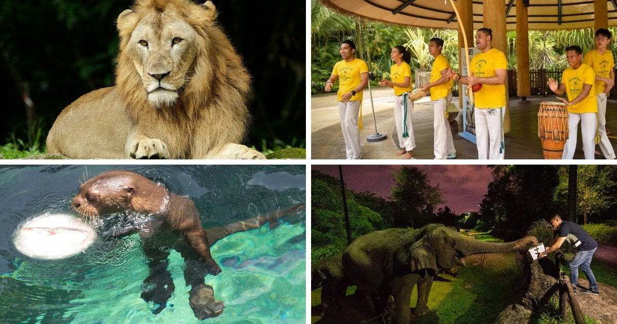 What's Happening at Wildlife Reserves Singapore this May and June