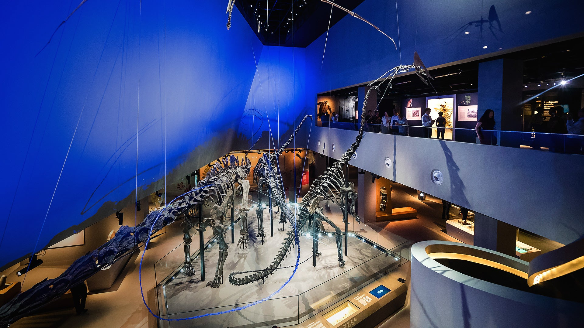 Natural History Museum with Dinosaur Fossils Reopens with 50% Off Tickets | Singapore