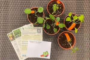 NParks Giving Free Seed Packets To Encourage Home Gardening | Gardening With Edibles