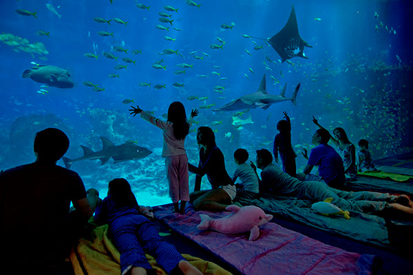 Things to do this Weekend: Sleepover with Your Little Ones at S.E.A. Aquarium!