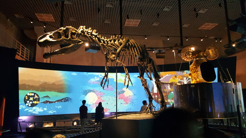 National Museum of Science and Nature Dinosaur display