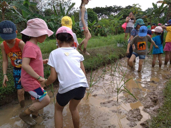 Paddy Field Activities