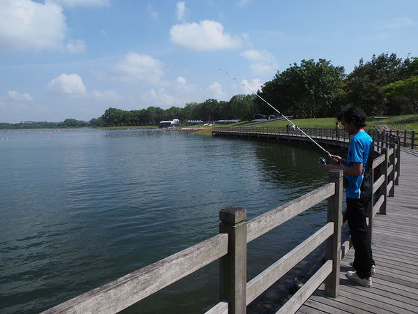 Bait the Fishes at Bedok Reservoir