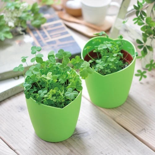 Four-leaf Clover Growing Kit - Miss Hosay