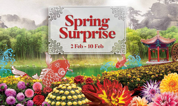 Usher in a Prosperous New Year with Spring Surprise 2019!