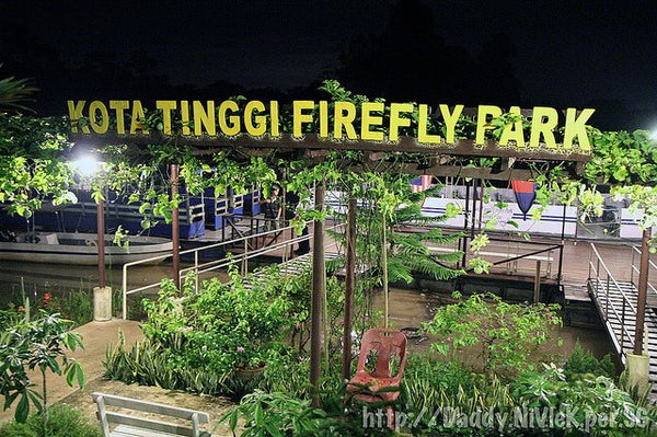 10 Family-Friendly Attractions to Visit in Johor  - Kota Tinggi Firefly Park