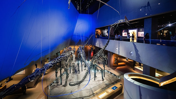 Delve into The World of Natural History at Lee Kong Chian Natural History Museum