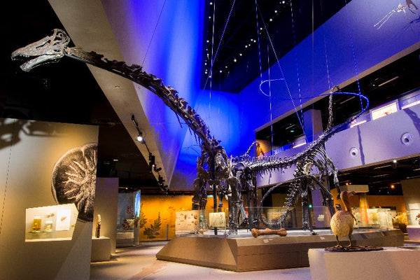 Discover the Various Lifeforms on Earth at Lee Kong Chian Natural History Museum