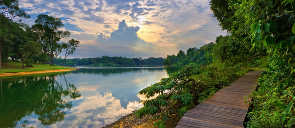 Go on a Nature Escapade at MacRitchie Reservoir
