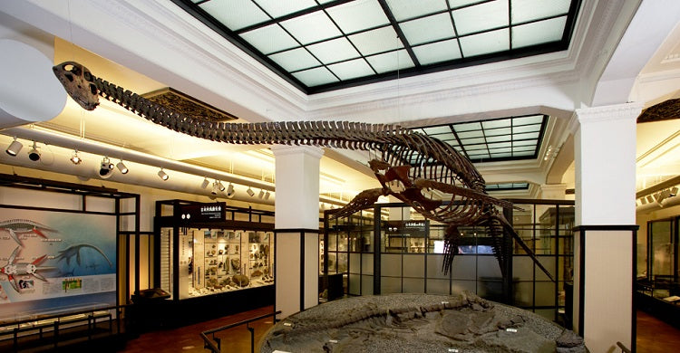 Noteworthy Museums to Explore from Home - National Museum of Nature and Science
