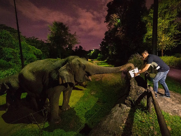 Night Safari Turns 25