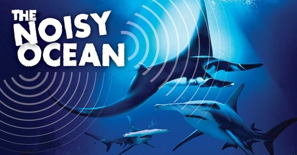 Ocean Fest: The Noisy Ocean – S.E.A. Aquarium