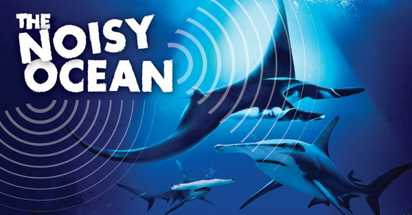 Hear the Sounds of the Ocean at S.E.A. Aquarium's Ocean Fest – The Noisy Ocean!