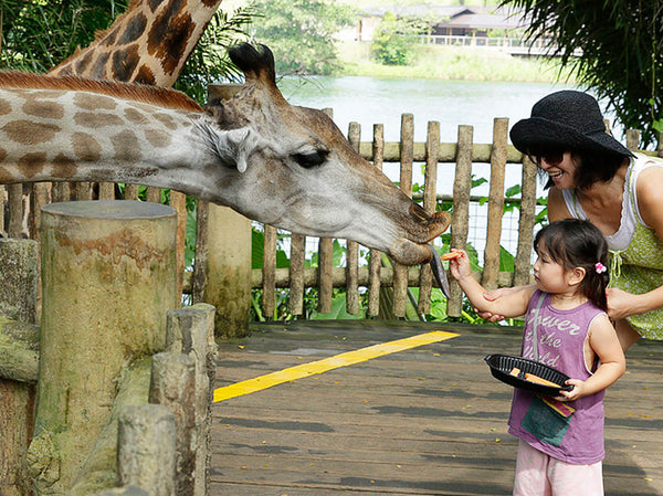 Free Entry to Singapore Zoo