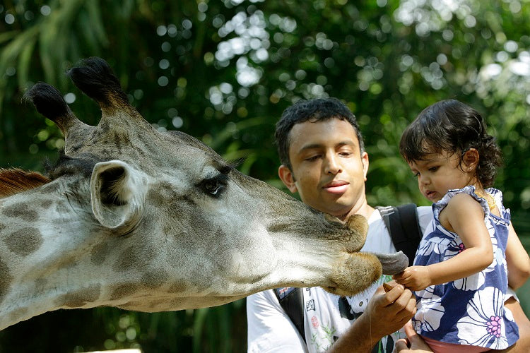Best Value Annual Family Memberships to Own in 2020 - Singapore Zoo, River Safari, Night Safari, Bird Park