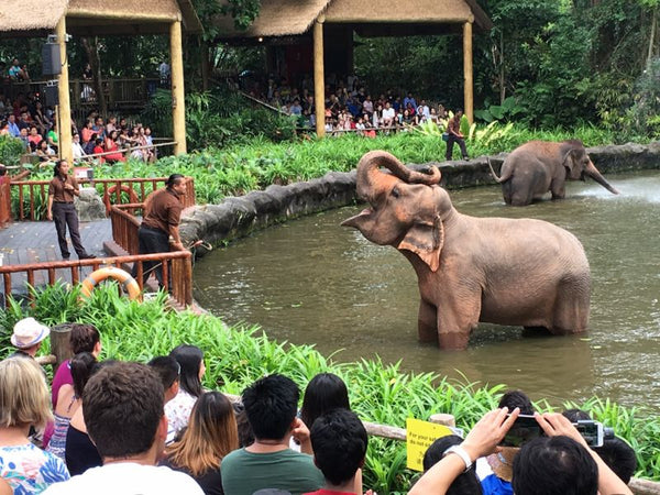 Visit Creatures of the Animal Kingdom at Singapore Zoo