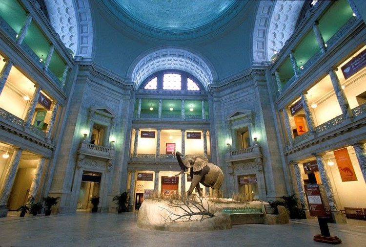 Noteworthy Museums to Explore from Home - Smithsonian National Museum of Natural History