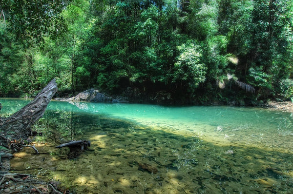 Endau-Rompin National Park – One of World's Oldest Tropical Rainforest