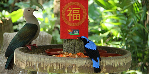 Things to do this Weekend: Join the Wildlife of Singapore with Your LOs in Celebrating this Chinese New Year! - JBP