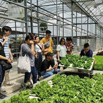 Half Day Farm Tour in Bollywood Veggies, Hay Dairies Goat Farm and Kok Fah Technology Farm