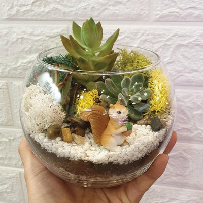 The Green Capsule: Open Succulent Terrarium DIY Kit @ Just $50 (Delivery Fee Inclusive)
