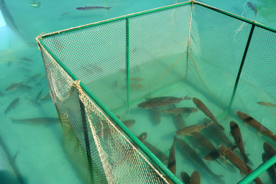 [Private Tour] Sustainability in Fish Farming & Aqua Culture at Qian Hu Fish Farm