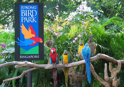 Jurong Bird Park Ticket +  Tram Rides: Tickets from $22