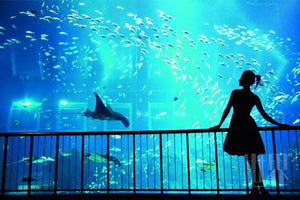 S.E.A Aquarium, Sentosa, Singapore Tickets - Discounted Tickets from $26