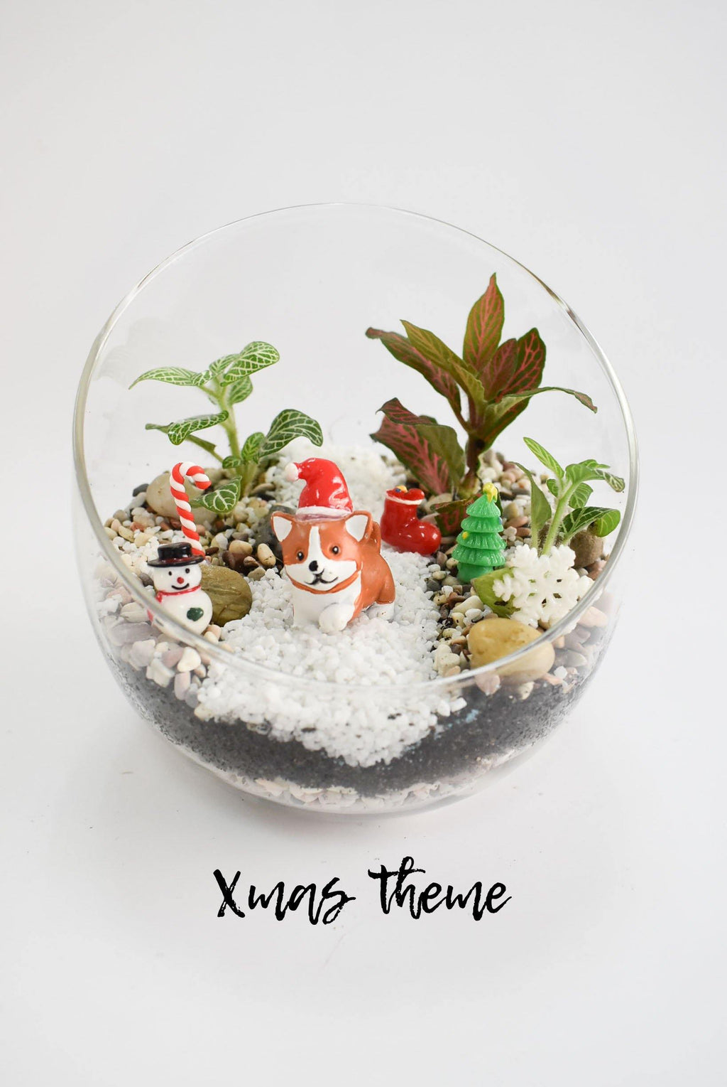 Guided Kids Fittonia Terrarium Workshop from just $54.60 for 2 Children - BYKidO
