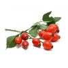 rose hips rose-plenishing facial creme - eZENtial - 2